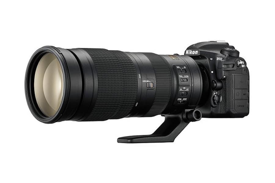 Best Nikon Lenses for Wildlife Photography